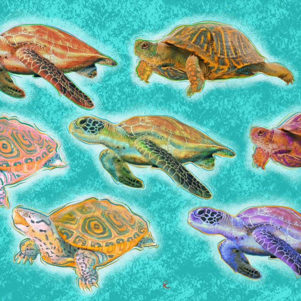 turtles in chesapeake bay art